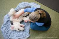 healing-paws-massage
